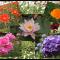 Flowerworks, en hyldest til en jeg elsker og refleksioner om det at miste